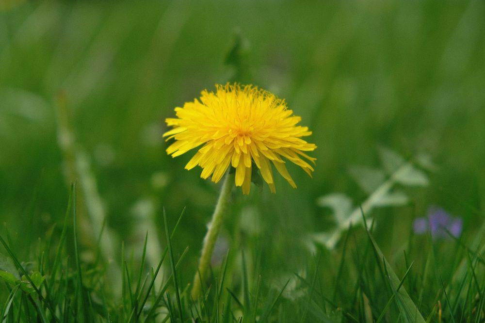 grass-3322305_1920.jpg