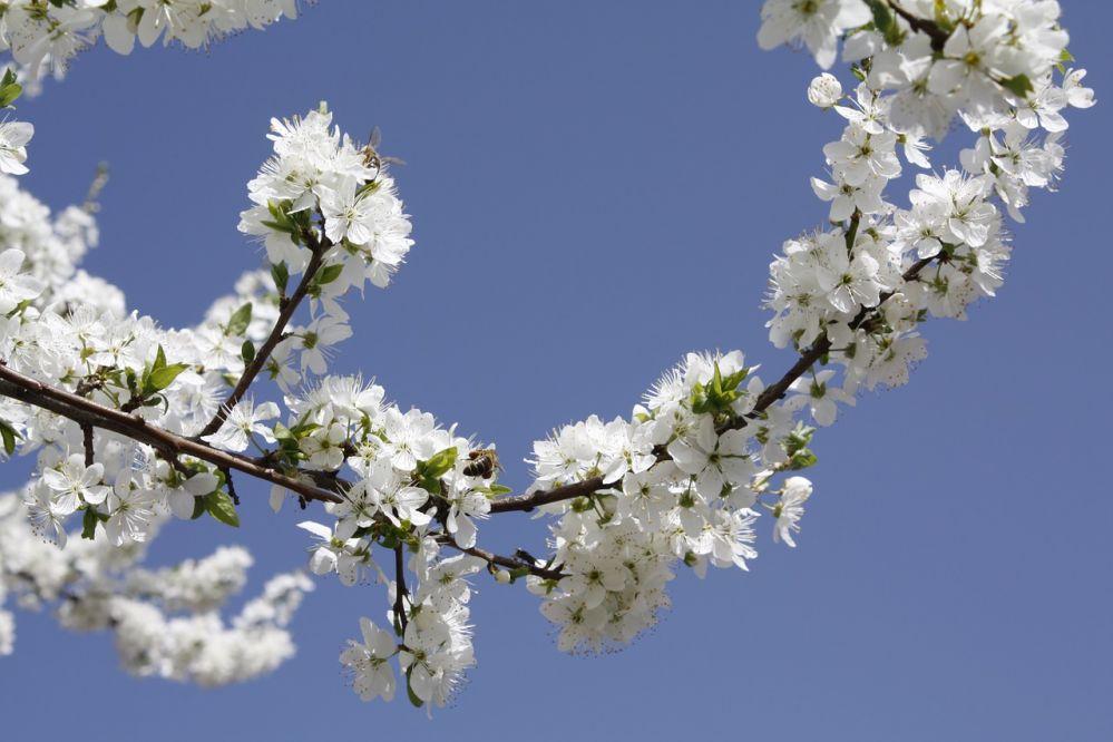 cherry-wood-3322321_1280.jpg