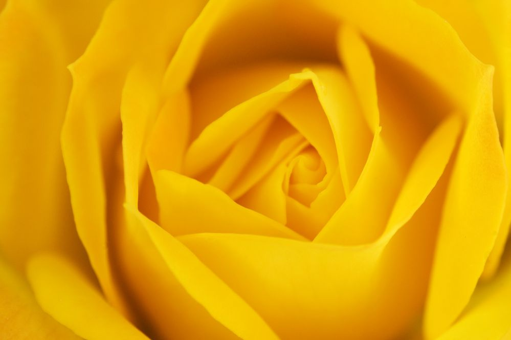 rose-3352858_1920.jpg