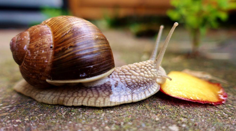 snail-3464926_1920.jpg