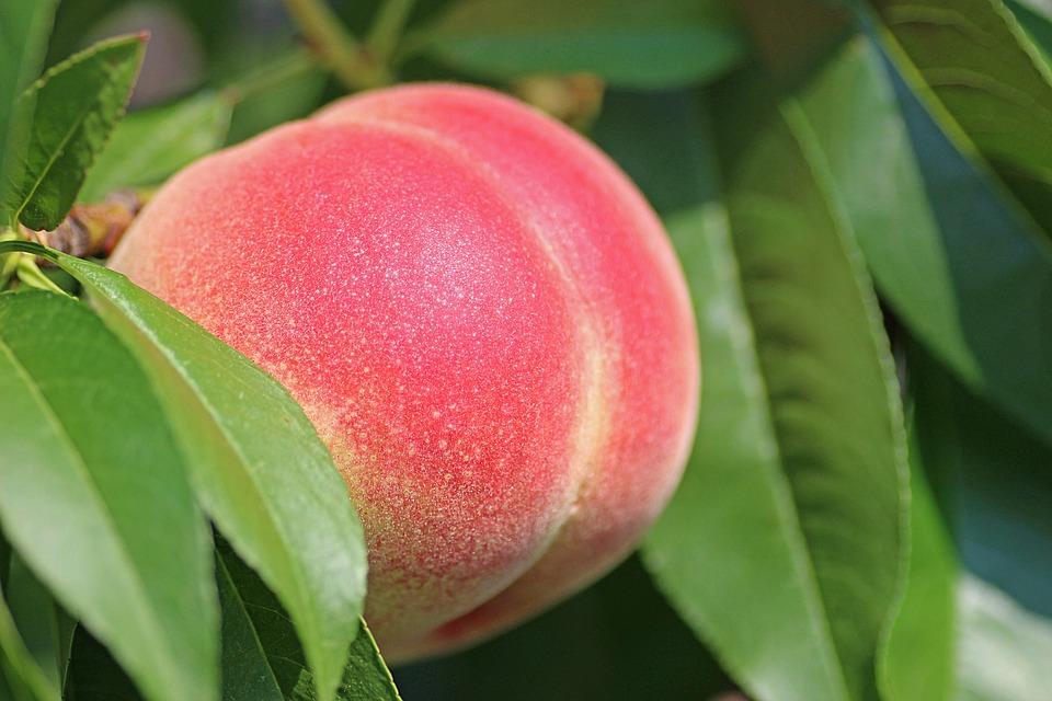 peach-2721852_960_720.jpg