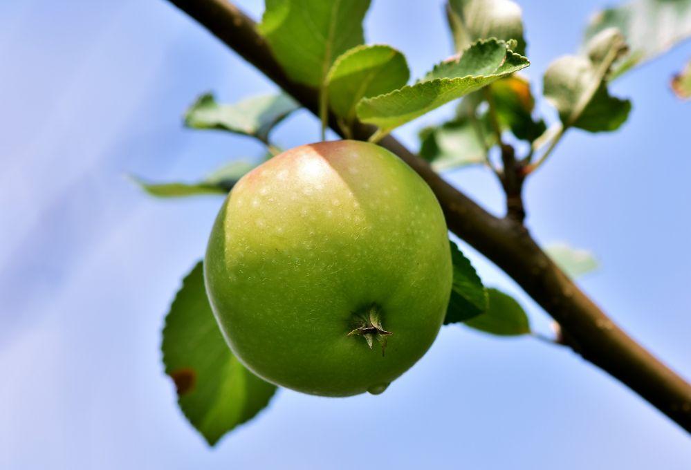 apple-3506215_1920.jpg