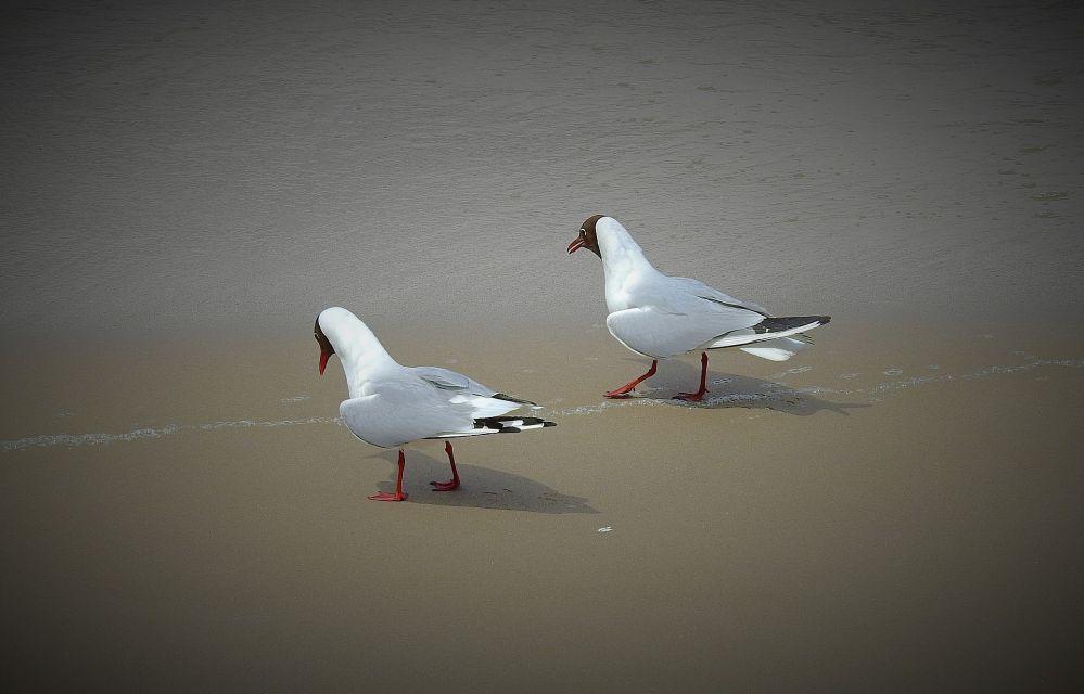 the-seagulls-3576235_1920.jpg